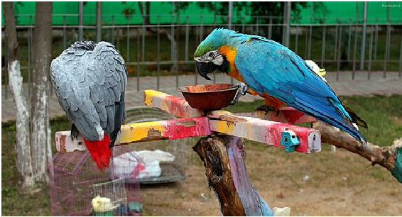 Bird's Aviary